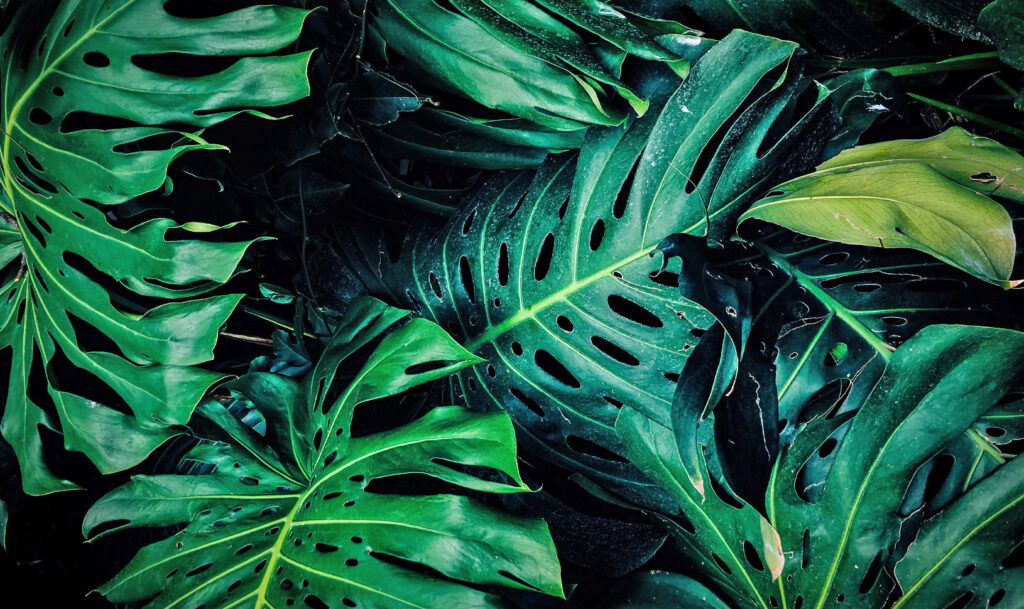 PLANTAS DE INSTAGRAM: LA MONSTERA